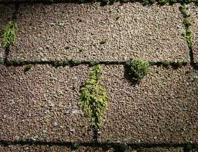 Roof Coating Manchester - Moss Removal